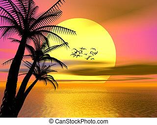 tropisk, färgrik, solnedgång, soluppgång
