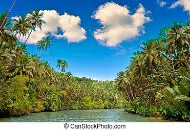 tropisk, flod