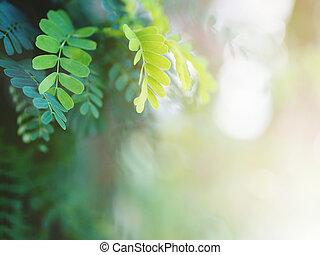 tropisk, grönt lämnar, för, fjäder, bakgrund.