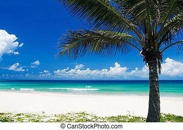 tropisk, håndflade strand, træ