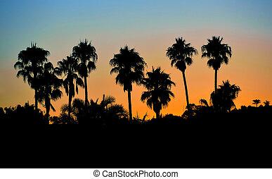 tropisk, håndflade træ