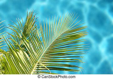 tropisk, hav