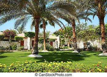 tropisk, hus, palm
