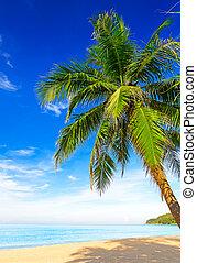 tropisk, hvid sand, hos, håndflade træ