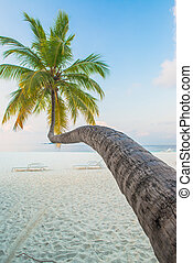 tropisk, hvid sand, strand, hos, håndflade