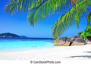 tropisk, hvid sand, strand, hos, håndflade træ