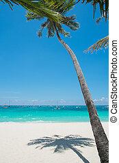 tropisk, hvid sand, strand, hos, kokosnød håndflade