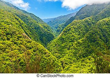 tropisk, miljö