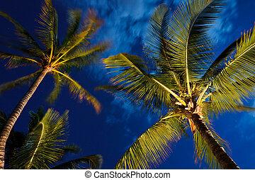 tropisk, natt himmel, palmträdar, och, måne