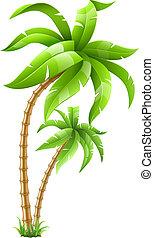 tropisk, palmträdar