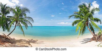 tropisk, panorama, kokosnöt, strand, palm