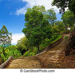 tropisk, parkera, gångstig