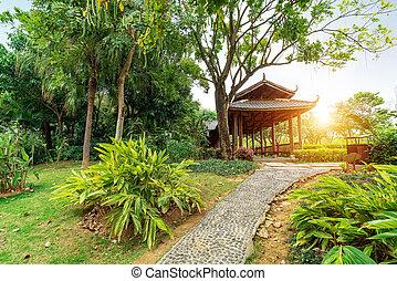 tropisk, parkera, landskap