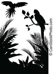 tropisk, silhuett, fågel