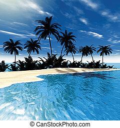 tropisk, sjögång palm