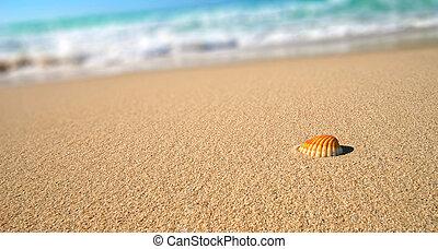 tropisk, skal strand, hav