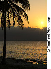 tropisk, solnedgång, strand