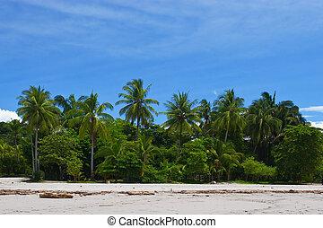 tropisk, synhåll