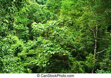 tropisk, tjock skog