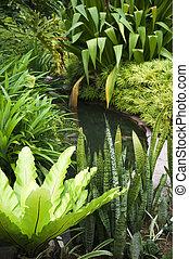 tropisk, trädgård