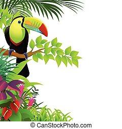 tropisk, tukan, skog, fågel