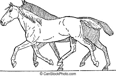 Trot or Horse Gait, vintage engraved illustration. Dictionary of Words and Things - Larive and Fleury - 1895
