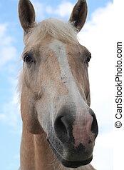 trots, paarde