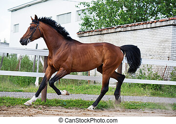trotting sportive horse in paddock