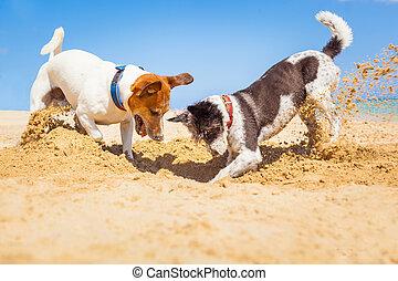 trou, chiens, creuser