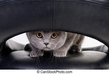trou, par, regarder dérobée, chat