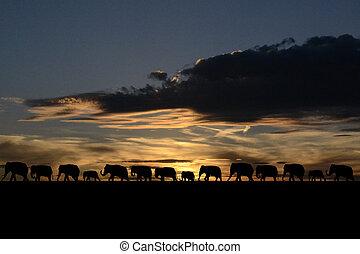 troupeau, éléphants