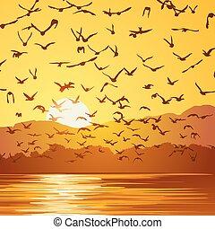 troupeau, carrée, oiseaux, illustration, sunset.