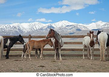 troupeau, chevaux