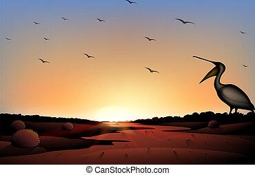 troupeau, coucher soleil, oiseaux, désert