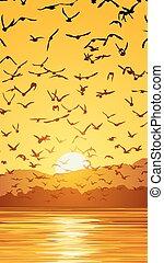 troupeau, oiseaux, sunset.