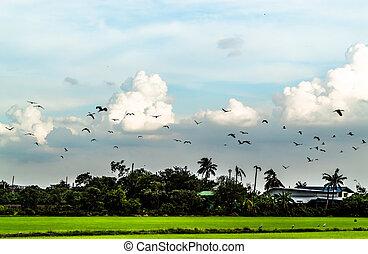 troupeaux, voler, oiseaux, sky.