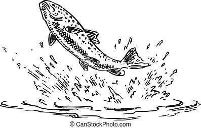 Trout jumping out of water, Figure done by hand. Vector...