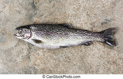 Trout on Stone - Fresh mature rainbow trout on natural stone...