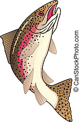 Vector illustration of trout fish