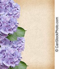 trouwfeest, hortensia, achtergrond