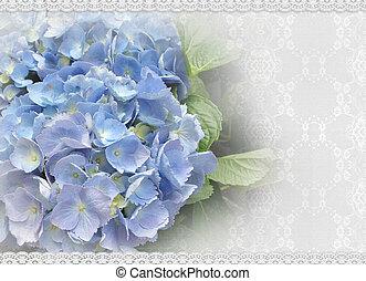 trouwfeest, hortensia, en, kant