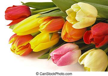 trs, kytice, o, tulipán, květiny