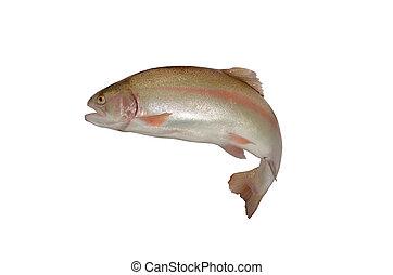 trucha, salmón