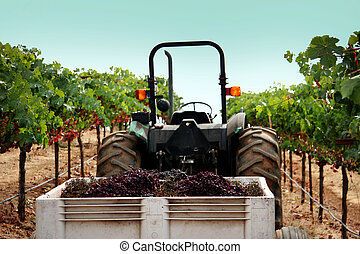 Truck at a vineyard - Vineyard in Sonoma county, California