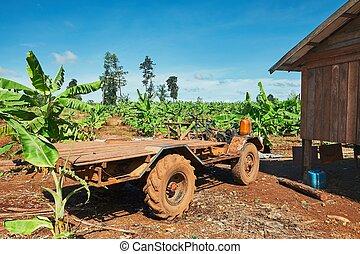 Truck in the banana plantation - Old truck in the banana...