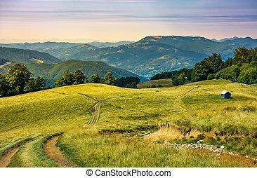 truck path down the grassy hill