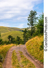 truck road through forested hills of Carpathians. beautiful...
