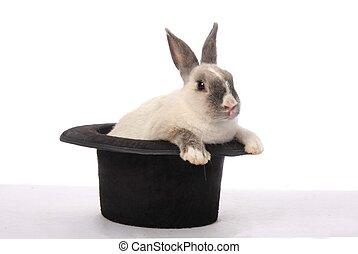 truco, conejo
