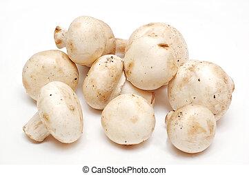 True mushroom