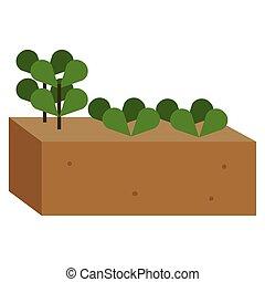 truie, isolé, plante
